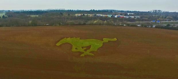 Mustang Field 2015 FSD
